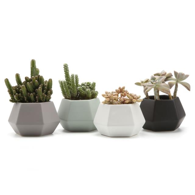 Where to find CERAMIC HEX PLANTER BLACK 3.75x2.5 in Ft. Wayne