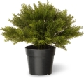 Rental store for SHRUB ARBORVITAE POT in Ft. Wayne IN