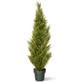 Rental store for TREE ARBORVITAE 4  EVERGREEN in Ft. Wayne IN