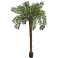 Rental store for PALM TREE w TOP 7 in Ft. Wayne IN