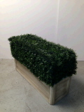Rental store for HEDGE PLANTER 36x22  TALL in Ft. Wayne IN