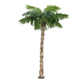 Rental store for PALM TREE YUCCA TRUNK 7  - 8  TALL in Ft. Wayne IN